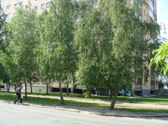 Address(es) on photo: Kuibisheva street, 108, Yekaterinburg